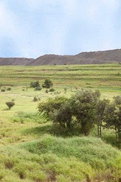Rehabilitated land Jellinbah Mine